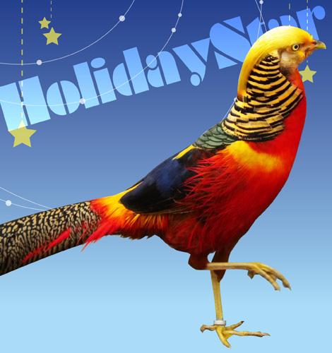 HolidayStar